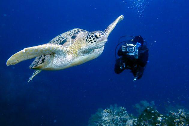 Five Best Dive Locations in Mozambique Anantara Mozambique Diving DiverPhoto e1525856842846