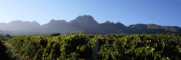 ALTO-VINES  Wine Making and Cultivars ALTO VINES