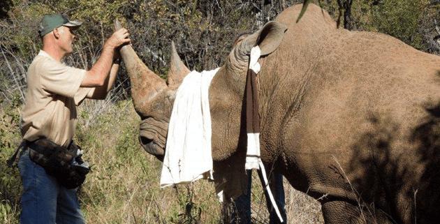 Ascari-Rhino-1  Askari Lodge Rhinos Dehorned Ascari Rhino 1