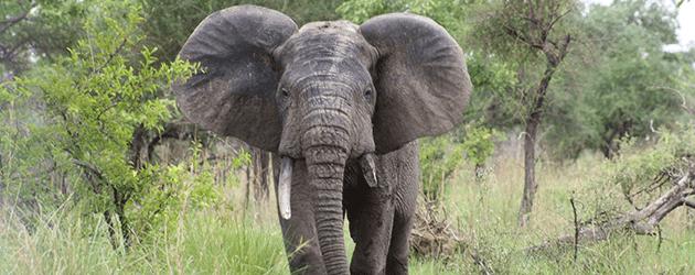 benin pendjari national park Rehabilitating Benin's Pendjari National Park Benin Pendjari Park Elephant
