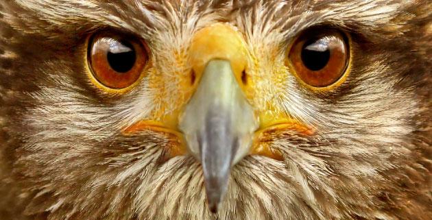CONSERVATION-Vulture-Saving-Initiative-Header