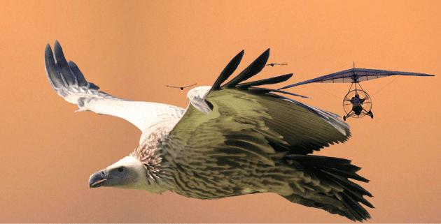 CONSERVATION-Vultures-and-Aviation-Header