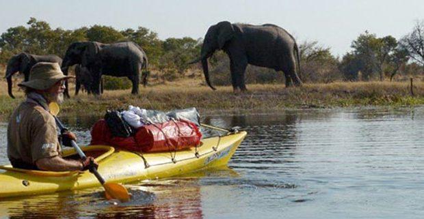 Man on kayak with elephant on river bank