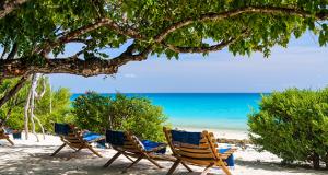 a beach in Mozambique