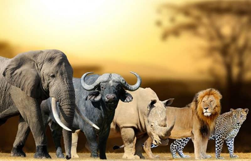 Africas Big 5 -  elephant, rhino, buffalo, lion, and leopard