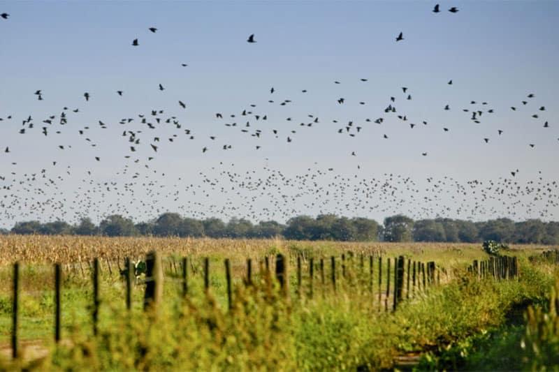 Doves in Cordoba Argentina.jpg
