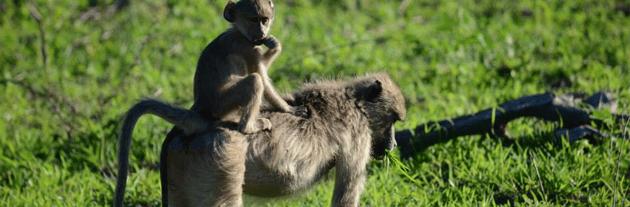 Zambezi Safari and Travel Company - Its detox time - we're eating the green stuff!