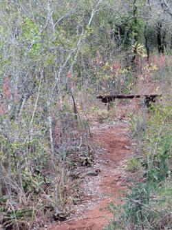 Bush-Path-Bench-2